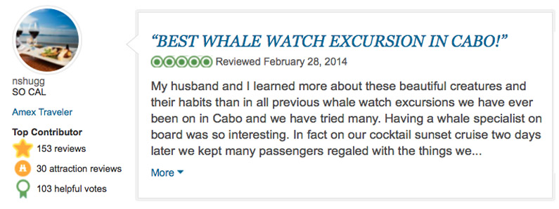 best whale watching excursion