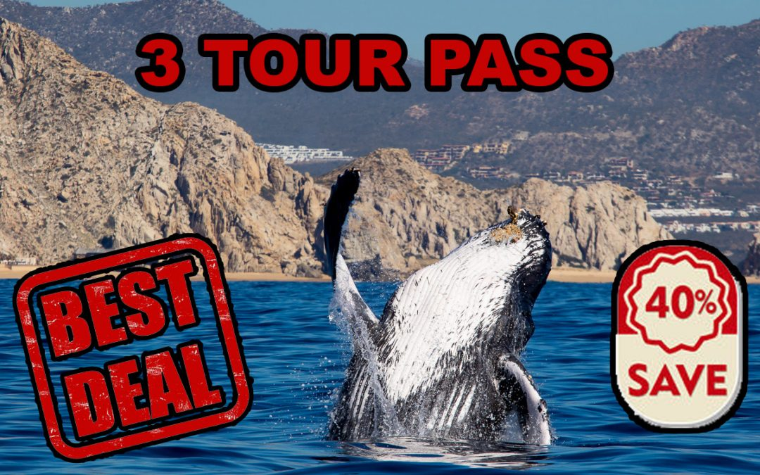 NEW: 3 Tour Pass Cabo Whale Watching Pass