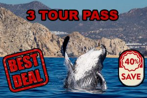 whale watching 3 times at best price