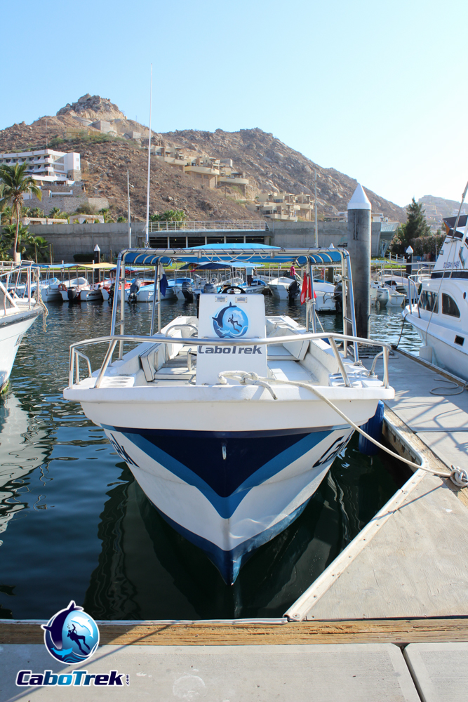 whale watching cabo boat
