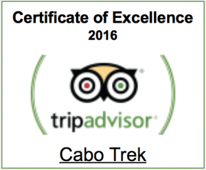 trip advisor certificate of excellence 2016 winner