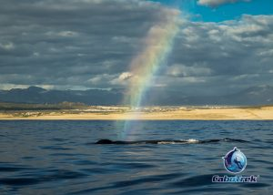 Whale Blow Rainbow