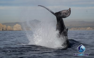 Recognizing Whale Surface Behaviors