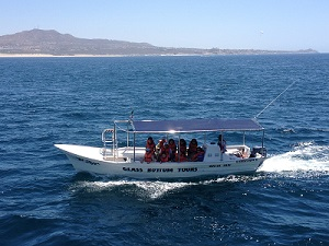 cabowhaletrekboats