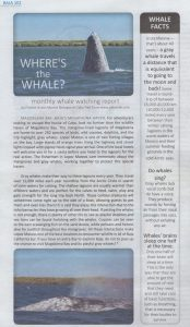 whale watching in cabo monthly report