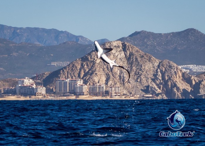 Cabo Trek Whale Watching – Weekly Report
