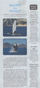 whale watching article feb 2016