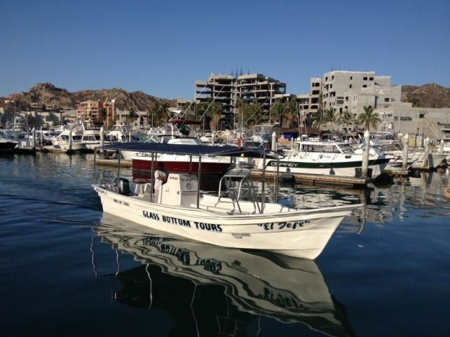 What is the best type of boat for whale watching in Cabo San Lucas?