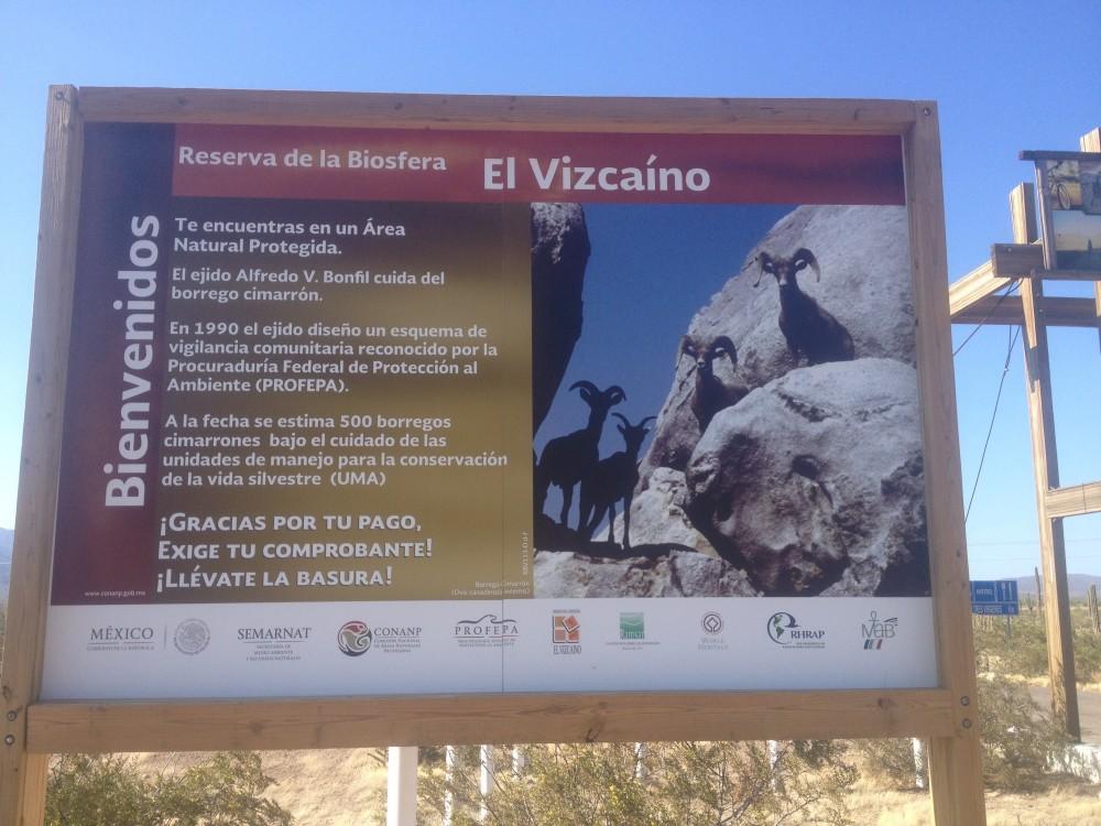 Vizcaino Desert