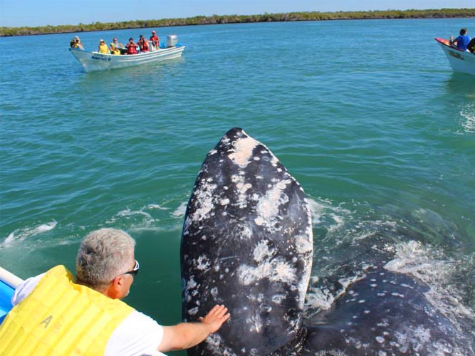 Intimate encounter with gray whales