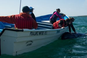 Best whale watching excursions in Baja