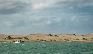 Magdalena Bay Whale watching