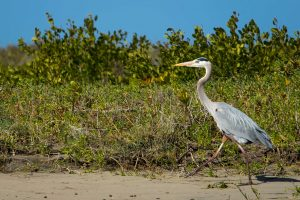 wildlife of baja
