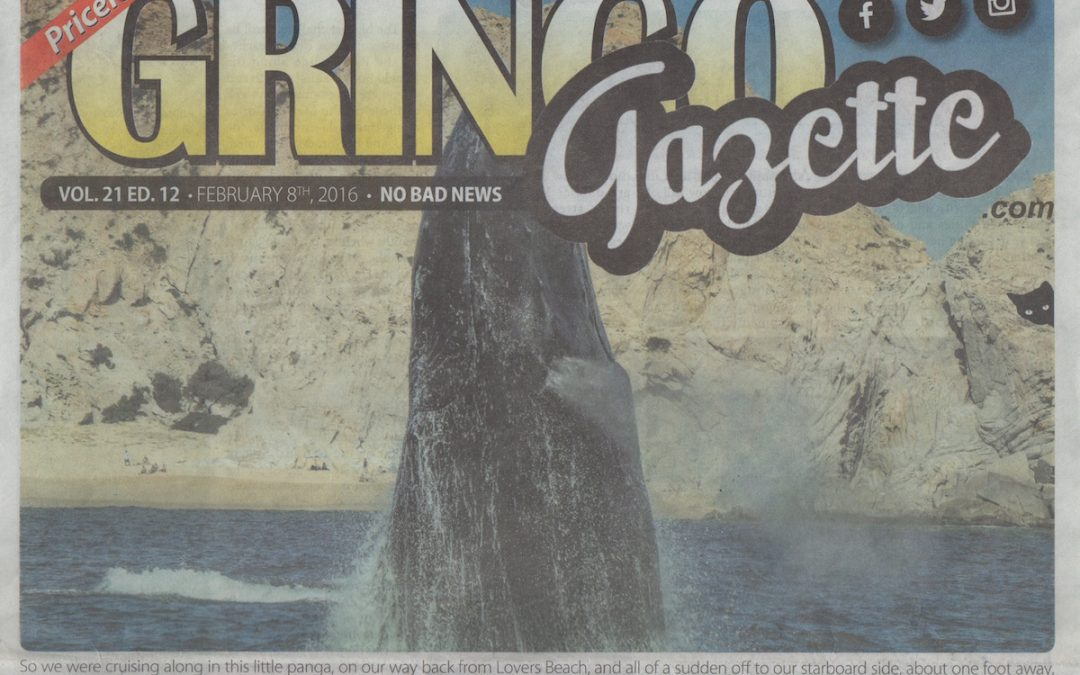 Gringo Gazette Article about Cabo Trek Whale Watching in Cabo