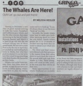 part two of whale watching article