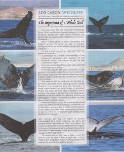 the importance of a whale tale