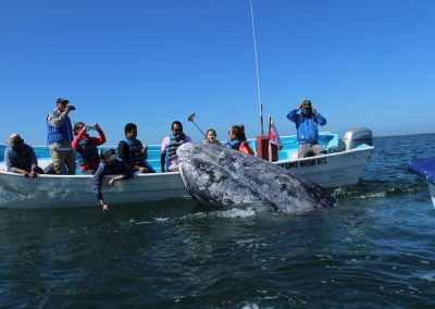 Close encounter with Gray Whales