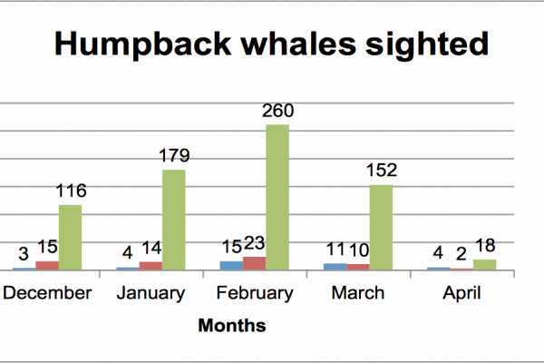 Humpback Whales Sigthed