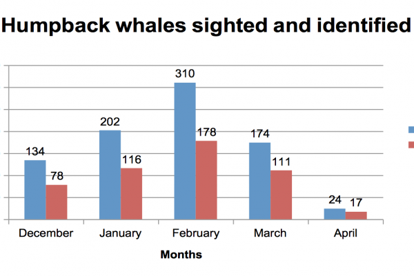 Identified Humpback Whales