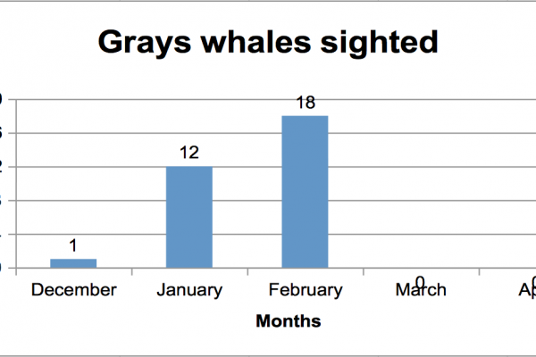 Sighted Gray Whales