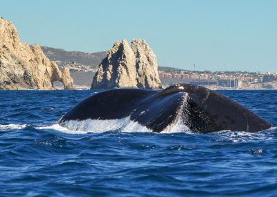 baja whale expedition-9