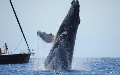 Whale Watch Cabo Season 2018