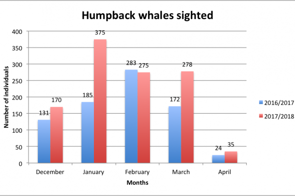sighted humpback whales