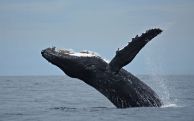 Whale Watch Cabo – Season 2018