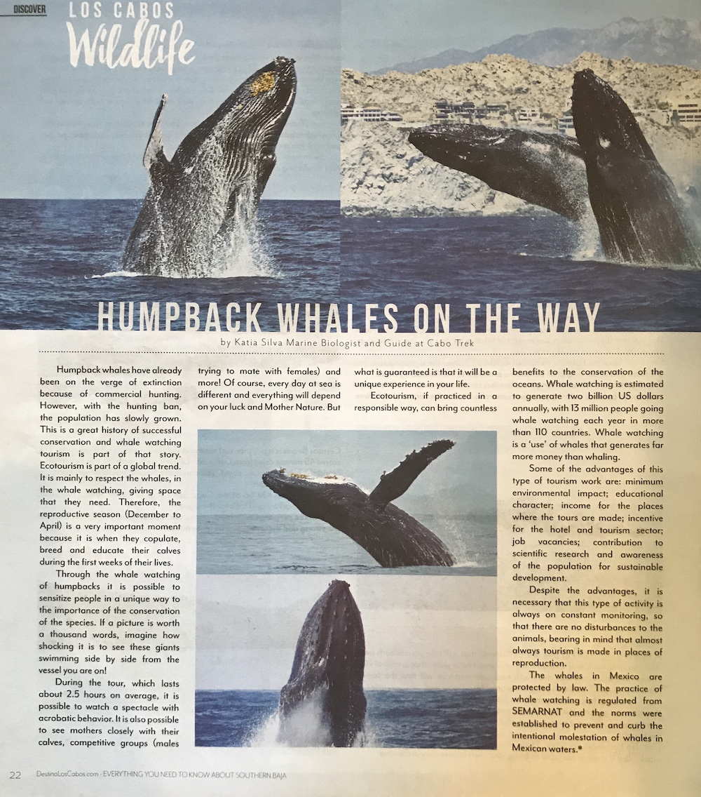 whale watch cabo