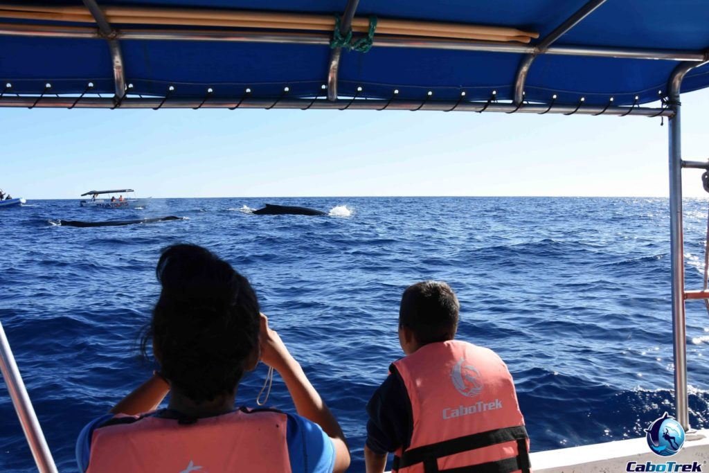 whale watching Los cabos conservation