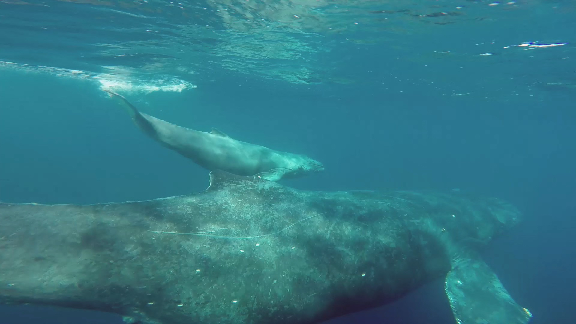 whale watching cabo project-2