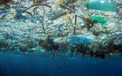 Effect of plastic in our Oceans