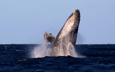 Extraordinary Whale Watching in Cabo