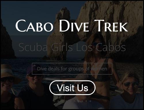 Cabo Whale Trek