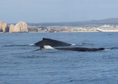 whale watch cabo 2020-1