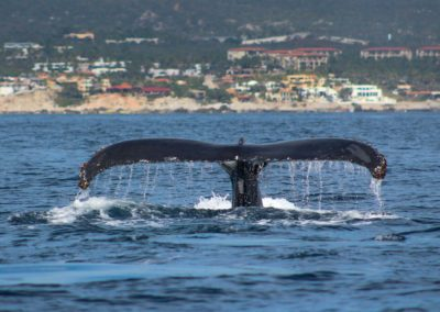 whale watch cabo 2020-2