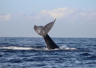 whale watch cabo 2020-5
