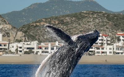Baja Eco Tourism