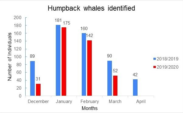 Humpback whales identified 2018_2019_2020