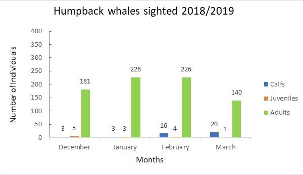 Humpback whales sighted 2018_2019