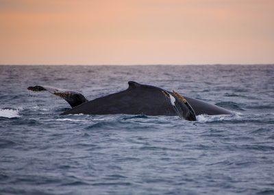 Sunset Whale Cruise_MQ_NL-5