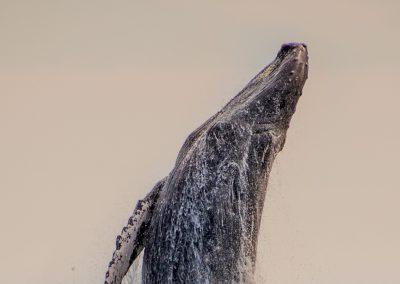 Sunset Whale Cruise_MQ_NL-6