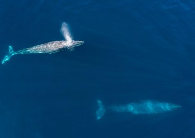 Whale Watching SJD_MQ_NL-12