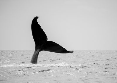 Whale Watching SJD_MQ_NL-17