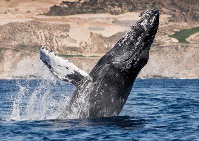 Whale Watching SJD_MQ_NL-3