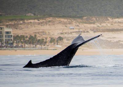 Whale Watching SJD_MQ_NL-5