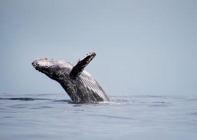 Whale Watching SJD_MQ_NL-6