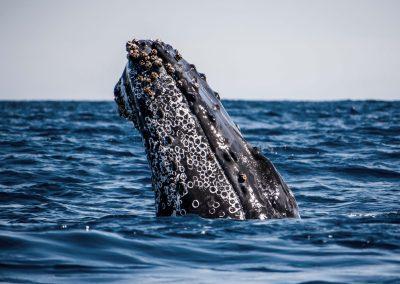 Whale Watching SJD_MQ_NL-7