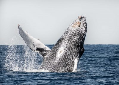 Whale Watching SJD_MQ_NL-9